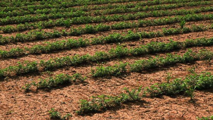 Panning of Farmland Crops