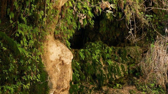 Cave Covered in Ivy