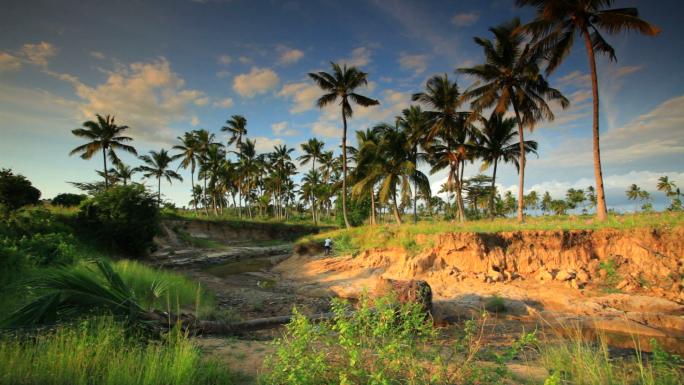 Palm Trees Near a Gorge