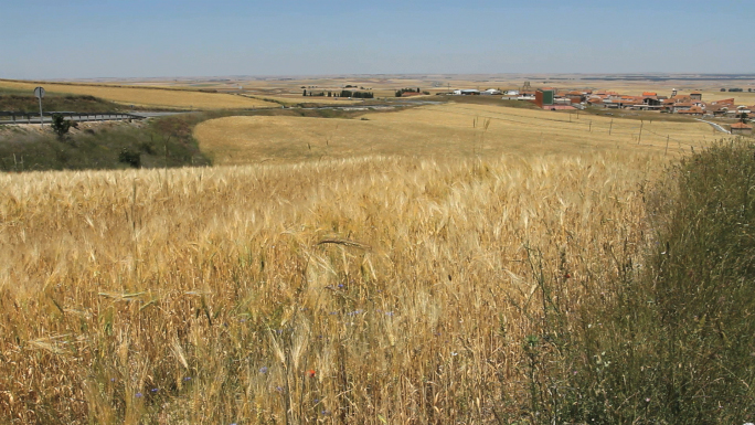 Wheat Field And Village