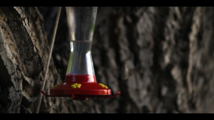 Hummingbird at Bird Feeder