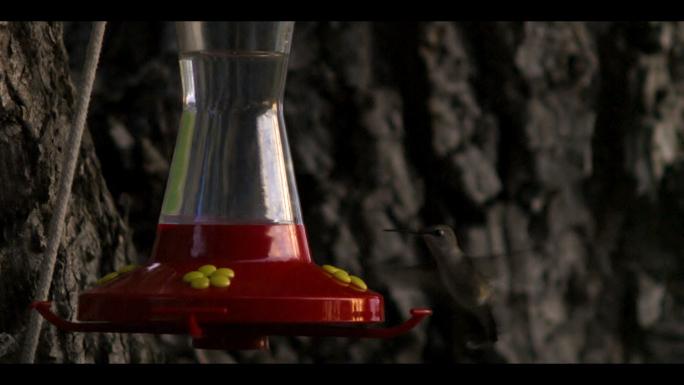 Hummingbird at Bird Feeder 3