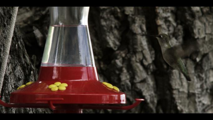 Hummingbird at Bird Feeder 4