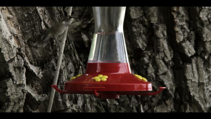 Hummingbird at Bird Feeder 5
