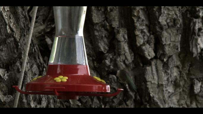 Hummingbird at Bird Feeder 6