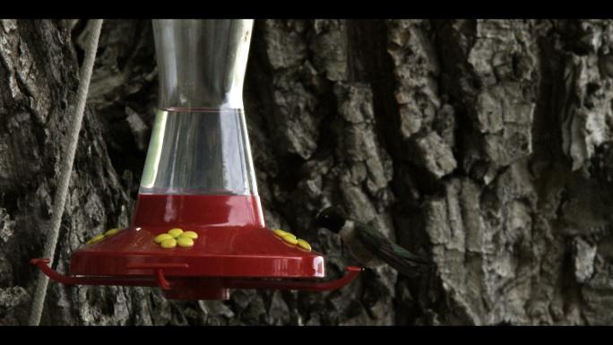 Hummingbird at Bird Feeder 7