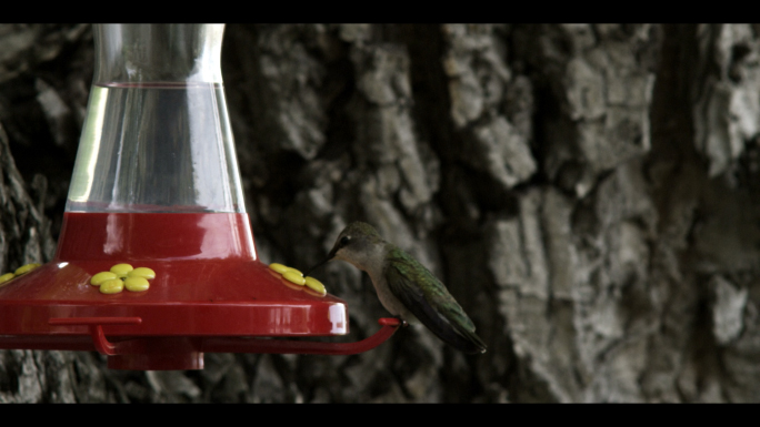 Hummingbird at Bird Feeder 8
