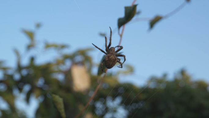 Big Spider in DanDong China