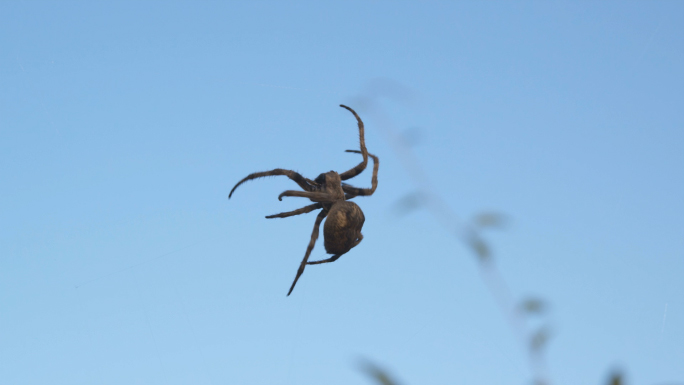 Big Spider in DanDong China 2