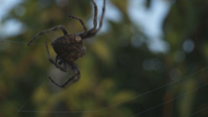 Big Spider in DanDong China 3