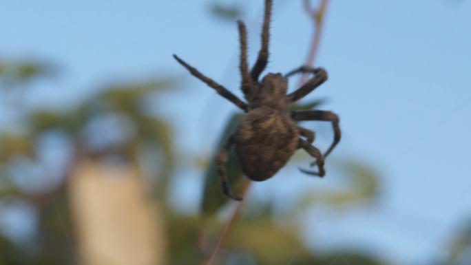 Big Spider in DanDong China 4