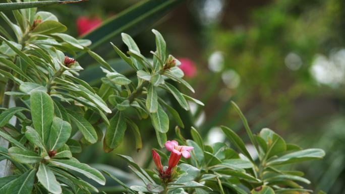 Pink Flower Bud On Green Leaves 2