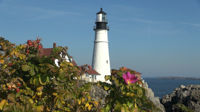Flowers with Lighthouse in Background