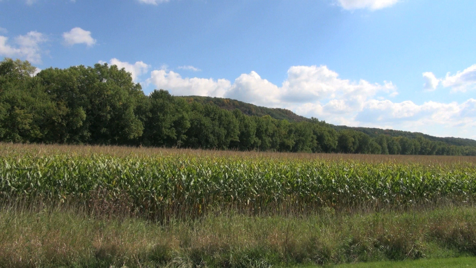 Cornfield and Trees Landscape