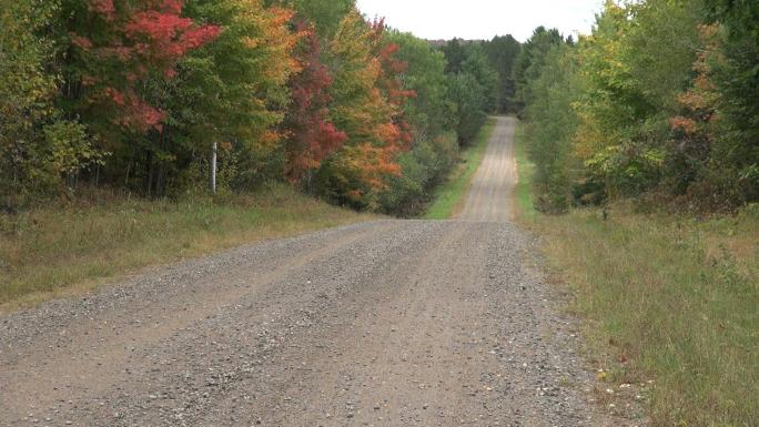 Gravel Road Through Woods